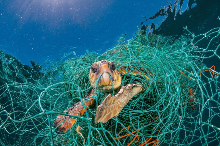 Sea turtle trapped in a fishing net