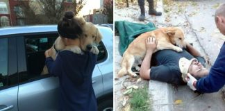 Pictures Of Dogs That Teach Us What Unconditional Love Truly Means