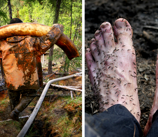 Explorer Risks His Life To Join Illegal Mammoth Tusk Hunt In Siberia, Captures How They Get Rich, Get Drunk And Nearly Die