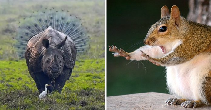 20+ Funniest Wildlife Photos Of 2018 Have Been Announced, And They Will Make Your Day