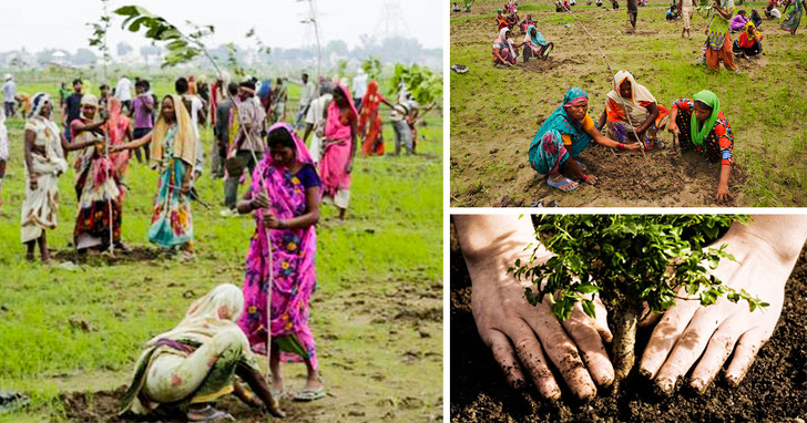 Indian citizens planted 50 million trees in a day