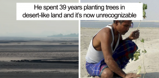 40 Years Ago A 16-Year-Old Began Planting A Tree Every Day On A Remote Island, And Today It's Unrecognizable