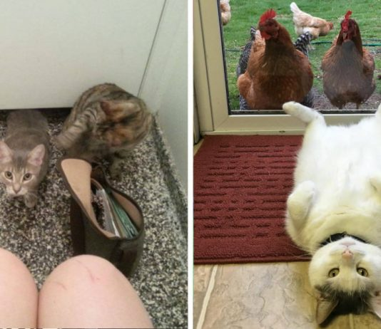 15 Reasons Why You Should Never Get a Cat