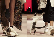 Random Cat Crashes Fashion Show, Fights Models