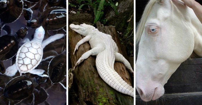 23 Albino Animals That Look Like They're From Another Planet