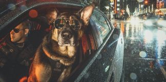 Vancouver Police Canine Unit Just Released Their 2019 Charity Calendar And It's Badass