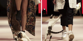 Random Cat Crashes Fashion Show, Fights Models