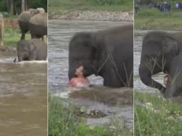 Adorable Baby Elephant Saves A Man She Mistakenly Thought Was In Danger