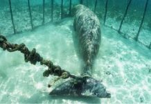 """Drone Footage Reveals Over 100 Whales Trapped In Secret Underwater """"Jails"""""""