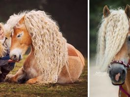 15 Breathtakingly Beautiful Horses We Can't Stop Staring At