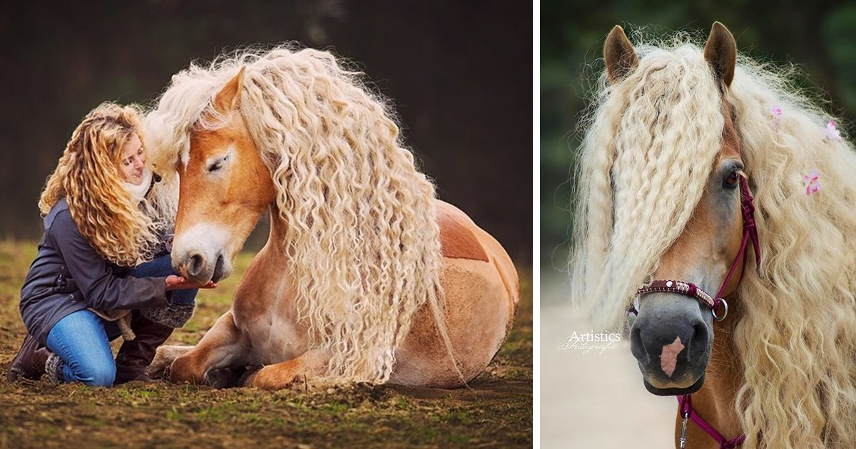 15 The Most Unique And Extraordinary Horse Breeds That Prove Nature Is The Most Creative Artist