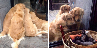 20 Times Retrievers Proved They Are The Best Dogs Ever