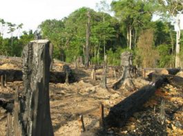 The Amazon Is Being Destroyed At The Fastest Rate In A Decade