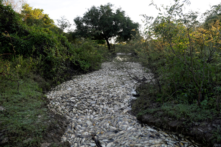 Dead fish float on the Confuso river, after authorities have taken samples for an investigation, in Villa Hayes