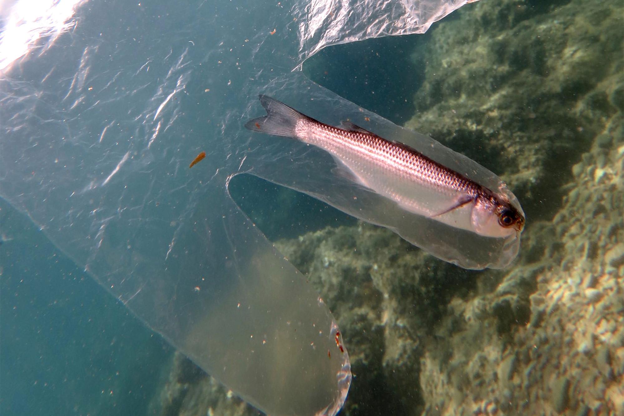 #Plastic #Glove #trapped #fish