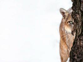 In Memoriam: The Species We Lost To Extinction In 2018