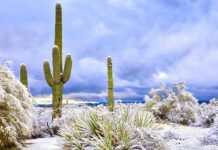 It Snowed In The Arizona Desert And The Photos Are Beautiful