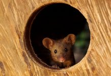 Man Discovers A Family Of Mice Living In His Garden, Builds Them A Miniature Village
