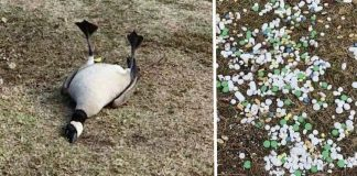 Neighbors Notice Birds Acting Strangely At Park, Find Hundreds Of Pills Dumped In The Grass