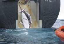 Japan Announce They Will Resume Commercial Whaling