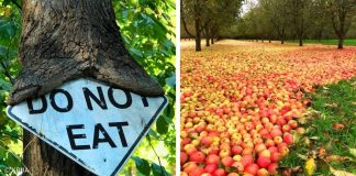 20 Photos Which Prove That Nature Doesn't Care About What People Want