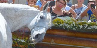 Grieving Horse Smells His Owner's Casket And Breaks Down At Funeral