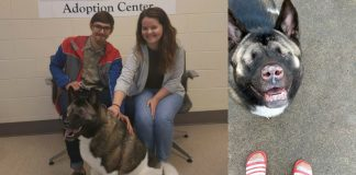 Sweet Rescue Dog Without Eyes Is Abandoned Twice, Then Couple Gives Her A Forever Home