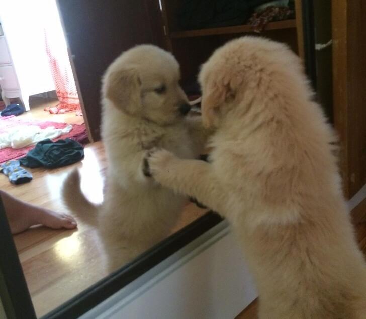 puppy in mirror