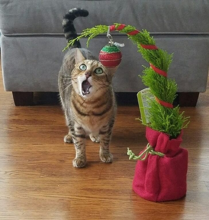 cat and Christmas toy