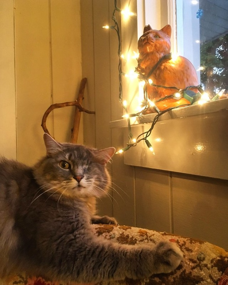 cat and lights
