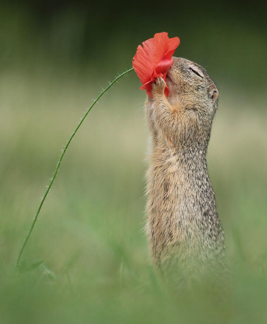 Squirrel Enjoys The Summer