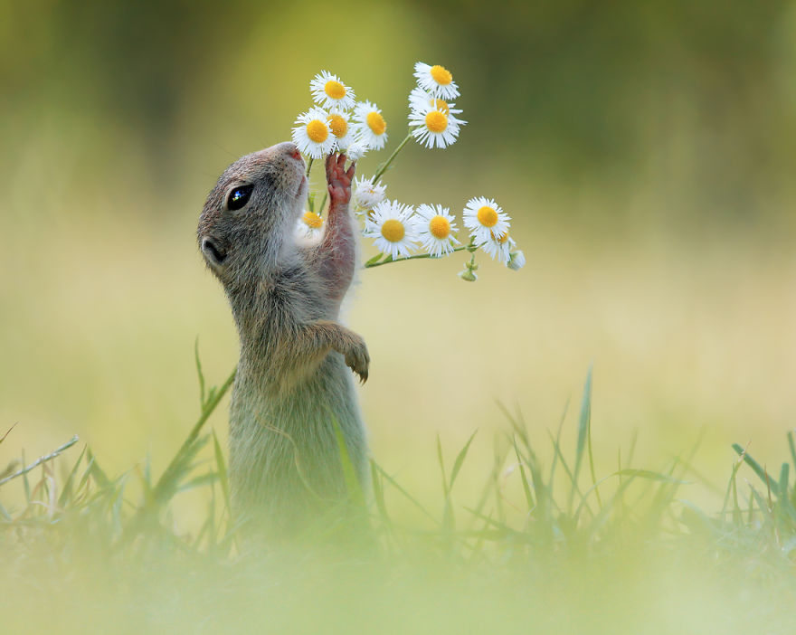 squirrel smelling flowers
