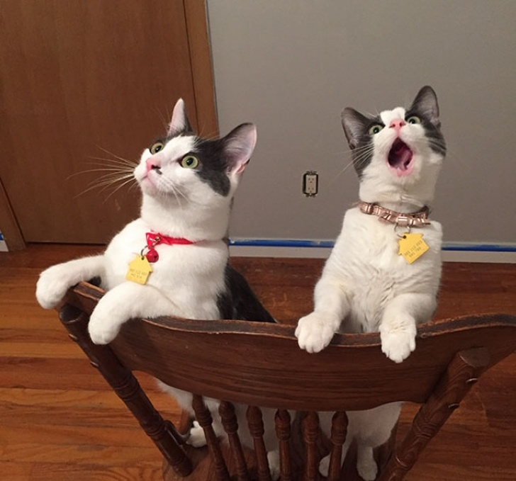 two cats on chair