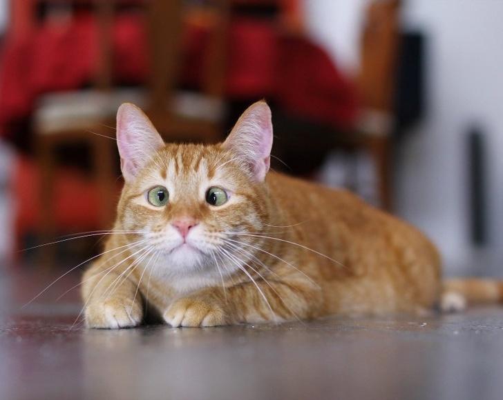 crossed eyed cat