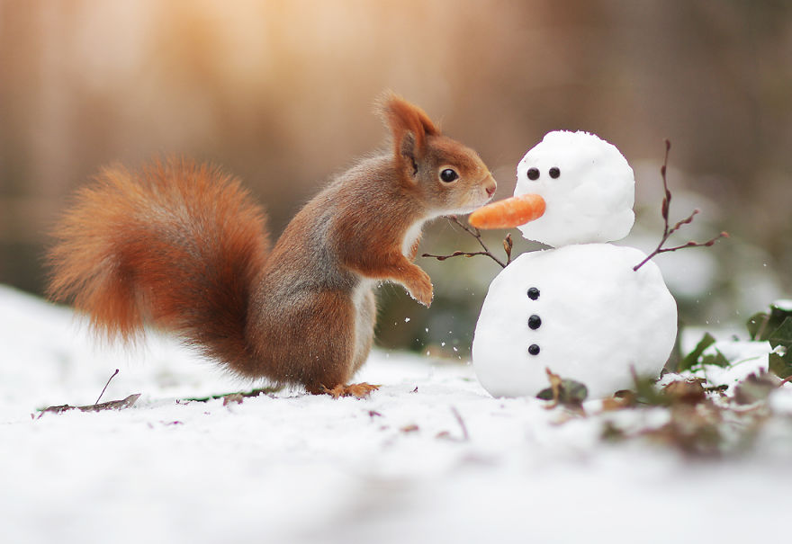 squirrel And snow man