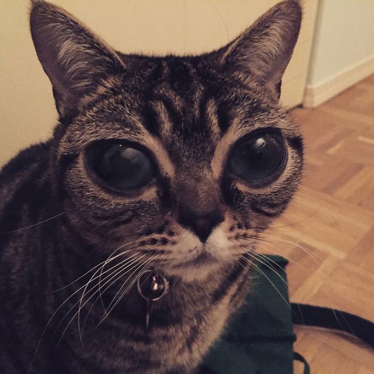 big eyes cat