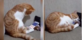 Cat Sees His Owner Who Died Years Ago And Can't Hold It in When He Sees The Video