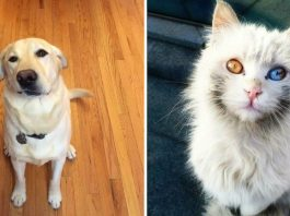 26 Adorably Imperfect Pets That Melted Our Hearts