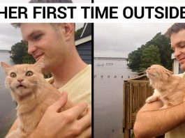 25 Hilariously Adorable Reactions Of Animals To Experiences They Had For The First Time