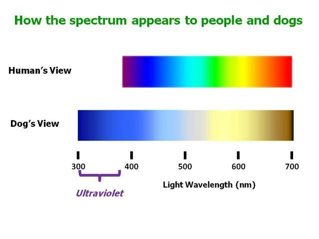 UV sensitivity