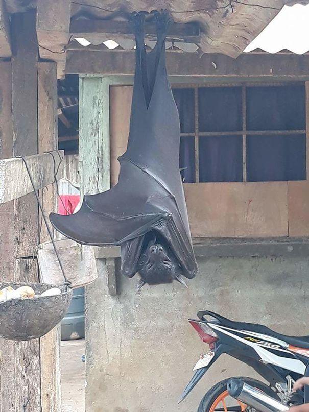 big bat