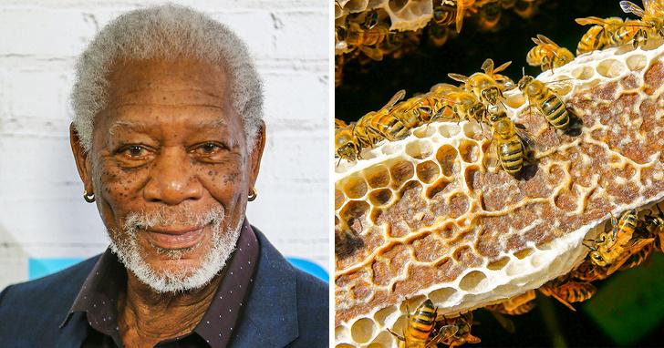 Morgan Freeman and bees