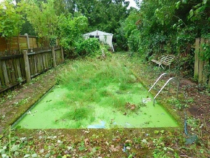 pool covered with algae