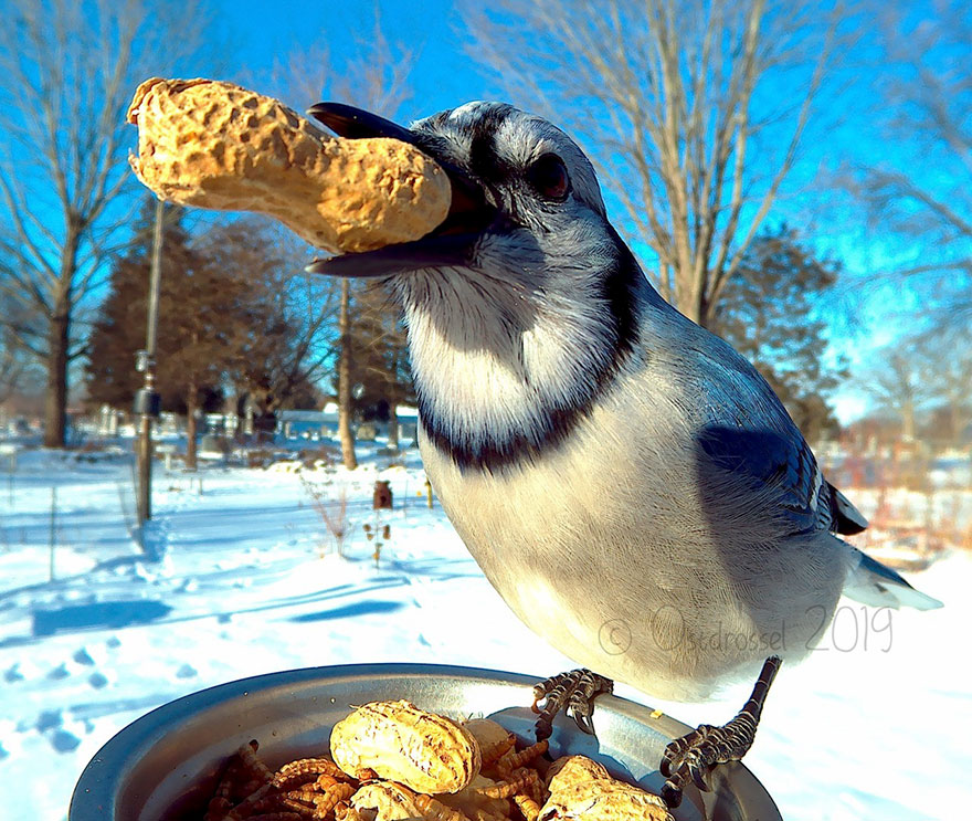 bird with pnut