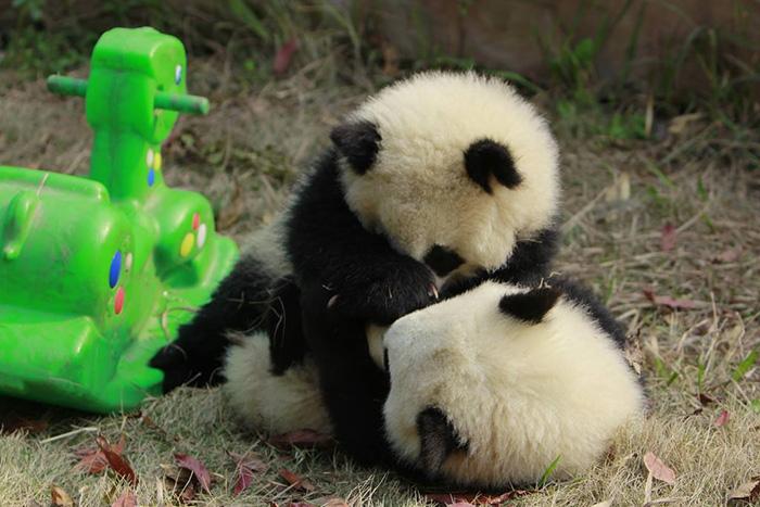 Covering face panda