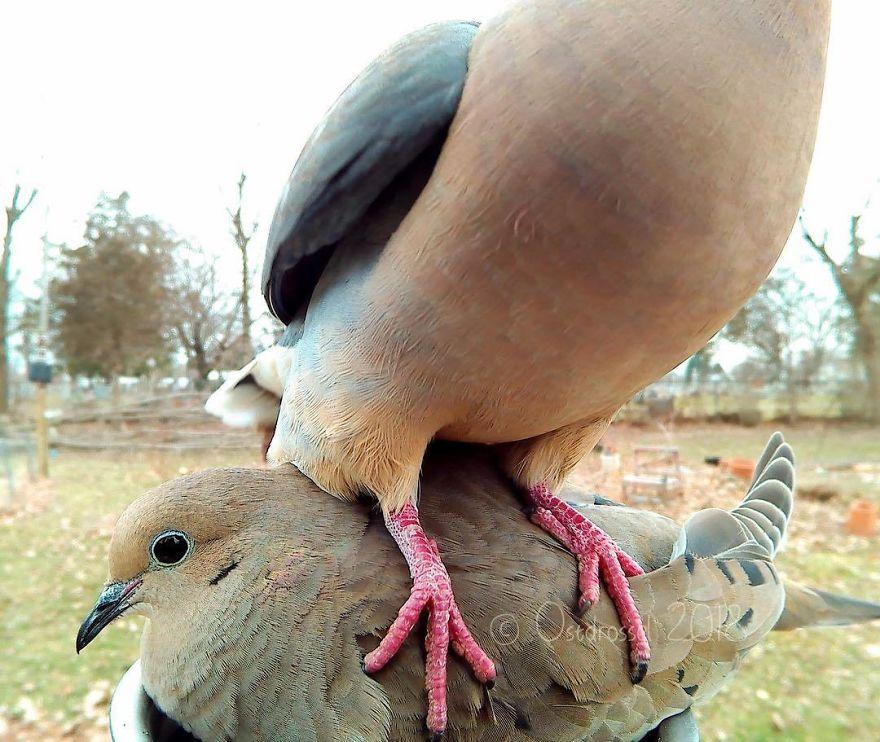 bird on bird