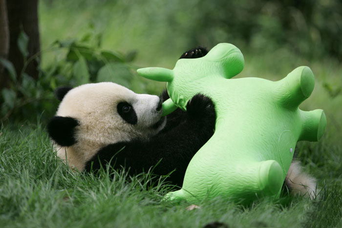 Panda with green toy