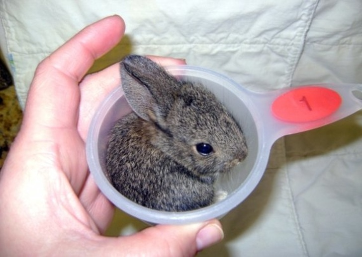 bunny in a little cup