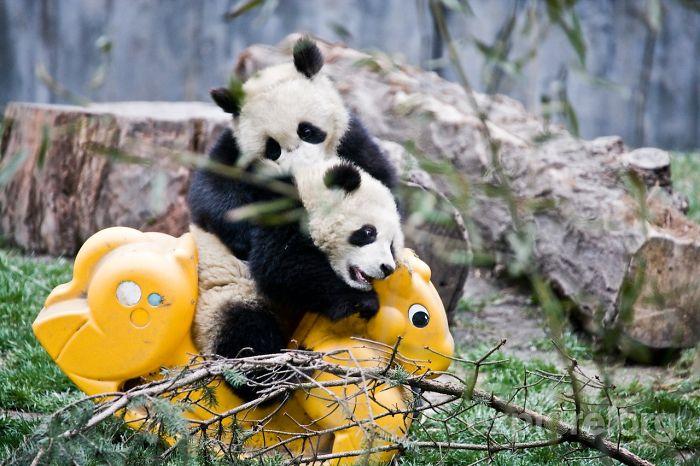 Panda with yellow horse