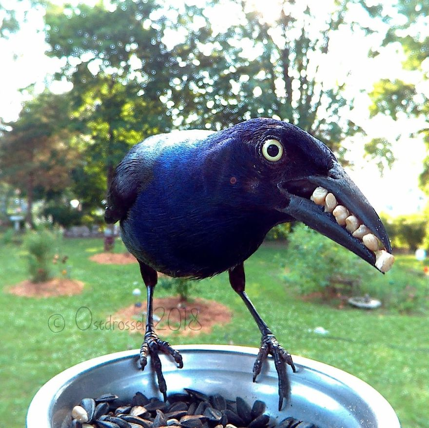 This bird has teeth!